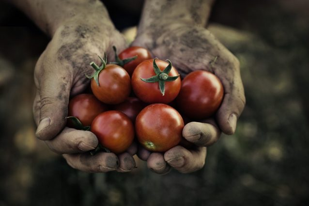 pomodoro-storia