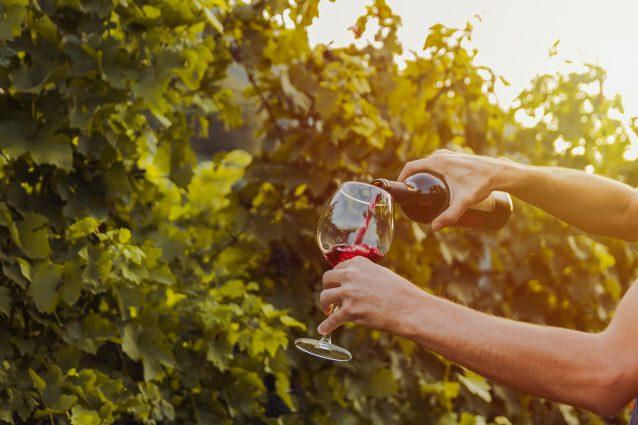 vigna vino rosso bottiglia calice
