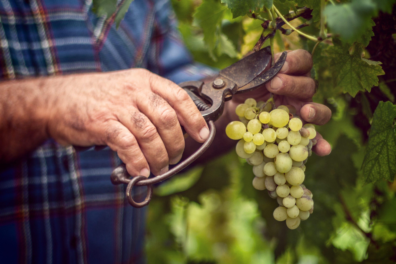 """Cantine Aperte in Vendemmia """"inaugura"""" la stagione del vino"""