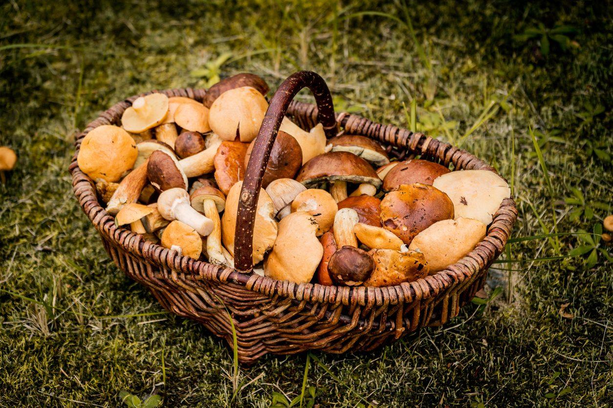 Funghi commestibili: quali sono le principali varietà e come fare a riconoscerli