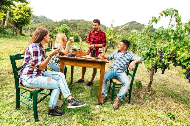 degustazione vino in vigna