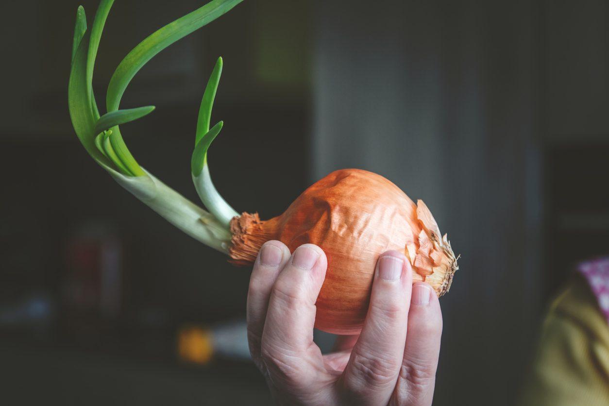 Cipolle germogliate: come riciclarle al meglio