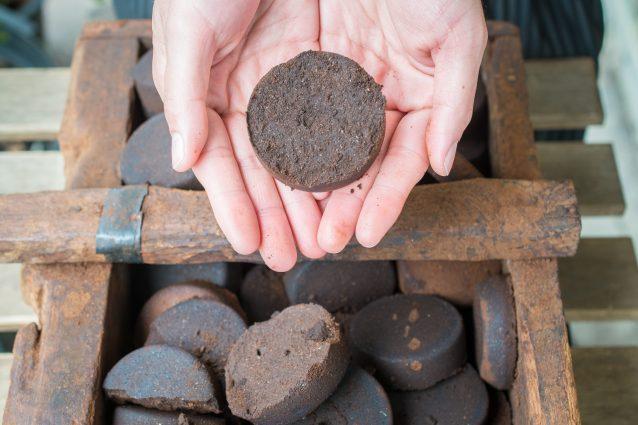 fondi di caffè coltivazione funghi