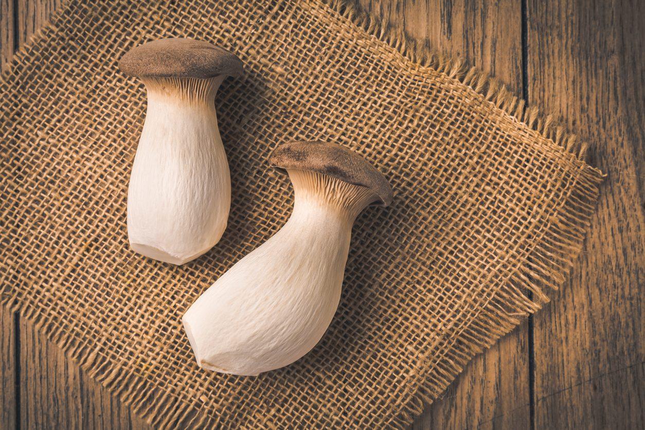 Funghi cardoncelli: dove si raccolgono, come si coltivano e come usarli in cucina